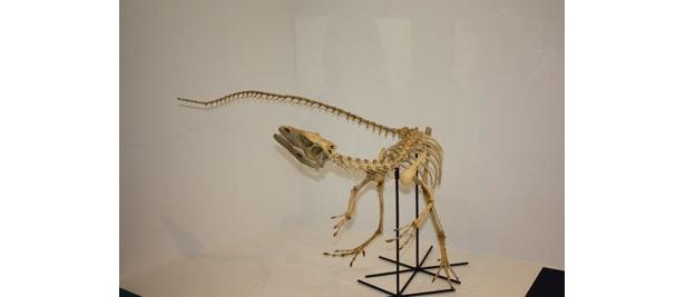 ティラノサウルスの親類サンタナプトル