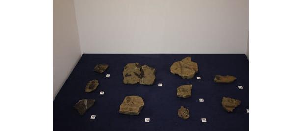 白亜紀の植物の化石も登場