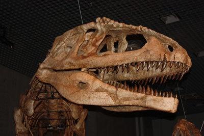 アウカサウルスの主食は竜脚類の卵や孵化直前の赤ちゃんだった