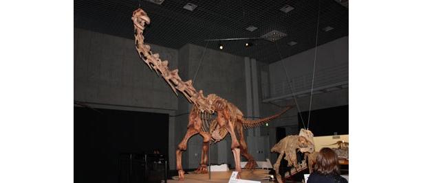 全長13mのマシャカリサウルス