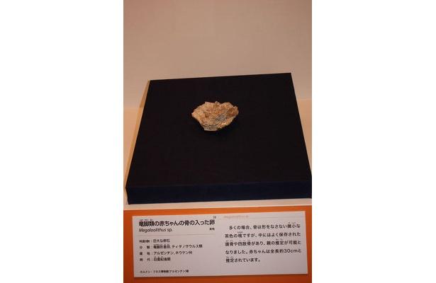 孵化前の赤ちゃんの化石