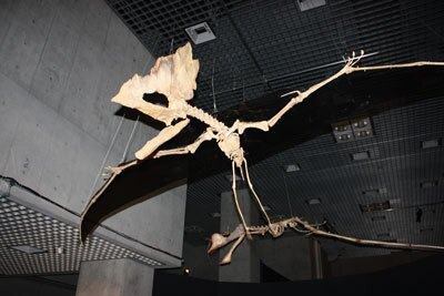 世界最古の歯のない翼竜タペシャラ