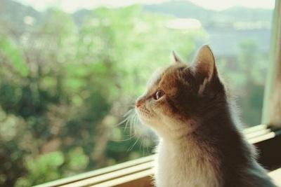 岩合氏は「ネコが幸せになればヒトも幸せになり、地球も幸せになる!」と語る