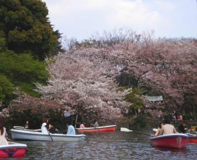 桜満開!春の井の頭恩賜公園も魅力の1つ