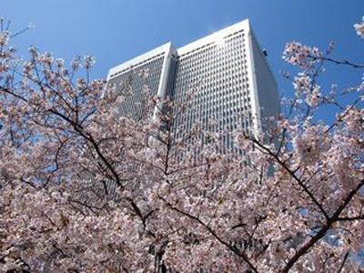 アークヒルズの桜も満開になればこんなにキレイ!