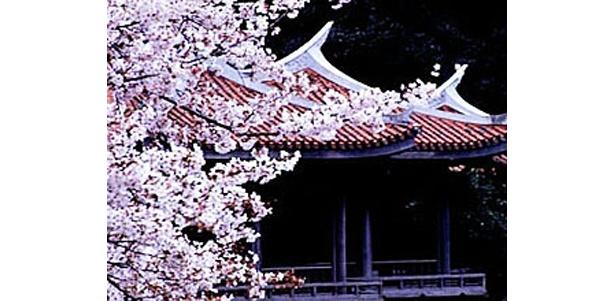 新宿御苑の桜も美しい (写真提供:日本観光協会)
