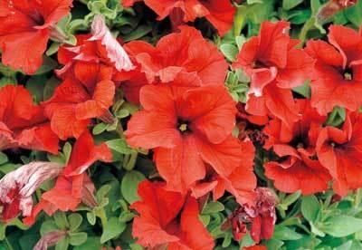 最終日の4/19(日)15:00〜、咲いている花の配布も予定