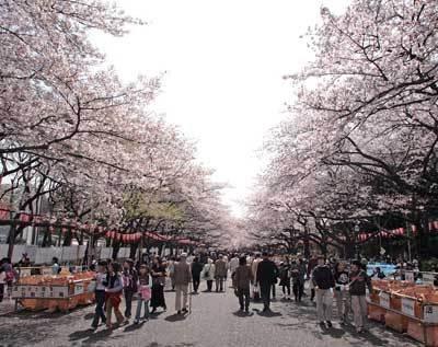 「うえの桜まつり」は、人出でにぎわう人気スポット!(写真はイメージ)