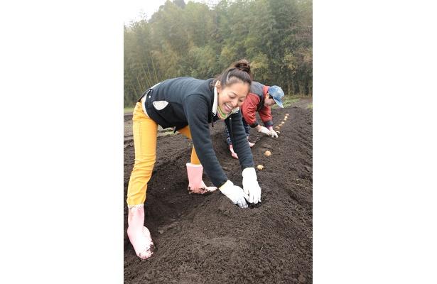 おイモの種を植える。土のにおいが懐かしい〜