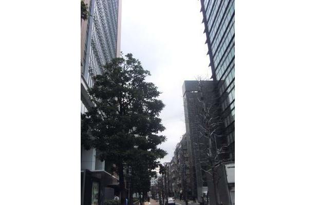 高いビルとビルの間は注意!