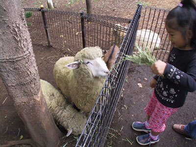 足立区生物園からヒツジやヤギもやってくる