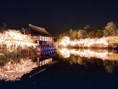 夜桜おすすめスポット:「泰平閣」からの池/池の中ほどにある、泰平閣(橘殿)から、コンサートの舞台である貴賓館を見た様子。池に映る桜と貴賓館はうっとりするような美しさ