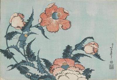 芥子 William Sturgis Bigelow Collection 1833-1834(天保4-5)年頃