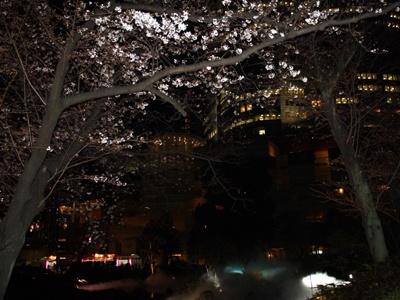 夜桜もキレイなので、ぜひチェック