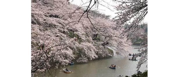 北の丸公園に行ったら、桜の名所・千鳥ヶ淵まで足をのばして