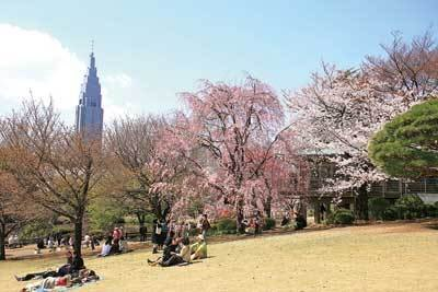 ぽかぽか陽気に散歩したい。新宿御苑