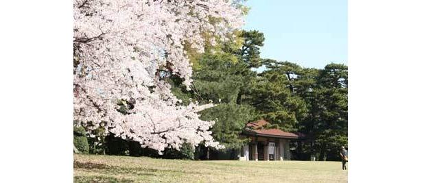明治神宮は、パワースポットの井戸と桜で心身ともにパワーアップ!