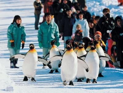 ペンギンも超かわいい!「旭山動物園ツアー」