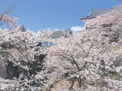 高田公園の夜桜から上田城跡・松本城と信越の桜の名所を巡り、話題の「越後上越 天地人博」も見学できる大満足のコース