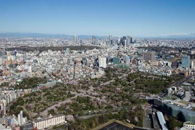 上空218mからの絶景!東京シティビューの「天空のお花見」