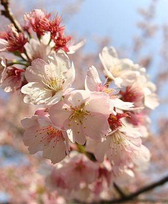 いよいよ最高の花見シーズンが到来!
