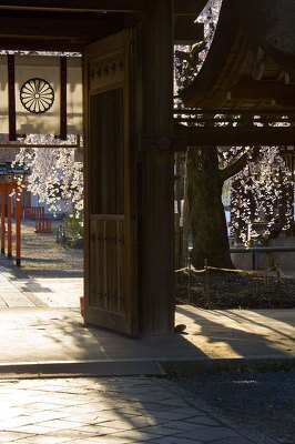 【平野神社】「ひっそりとした神社で撮影していると荘厳な気持ちになります」写真家・サダマツヨシハルさん※2009年3/26撮影
