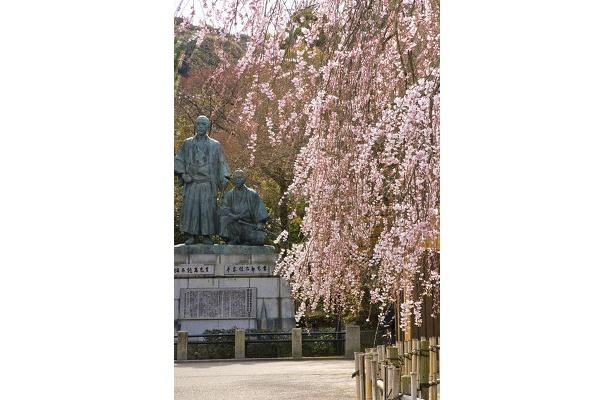 「園内奥には、「坂本竜馬像と中岡慎太郎像があり、風情のあるシダレ桜が咲いています」(サダマツ談)