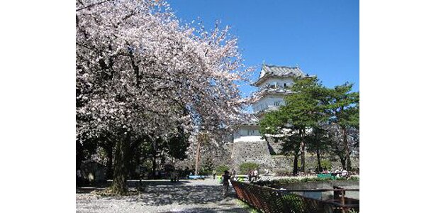 小田原城址公園 (写真提供:日本観光協会)