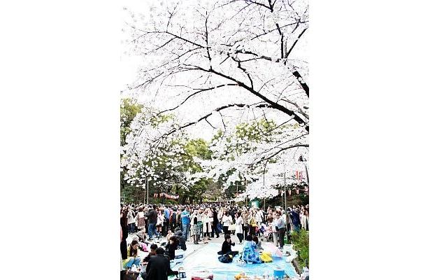 桜の木のことも考えつつ、今年も花見を楽しもう!