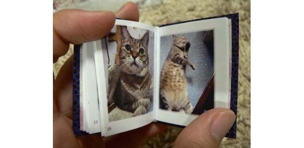 猫の写真集。ページをめくるのも楽しい