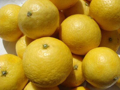 これが「湘南ゴールド」のもとになった神奈川県のオレンジ「湘南ゴールド」