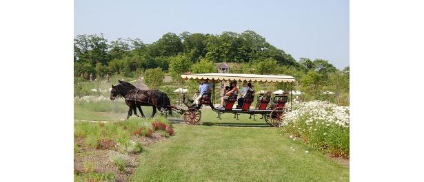 庭園内の遊覧馬車(1人500)