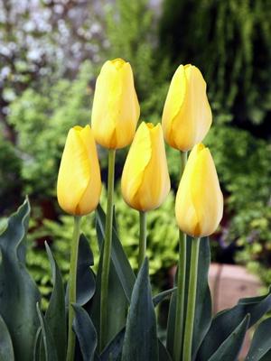 黄色い色が元気をくれそうな「月浪漫」