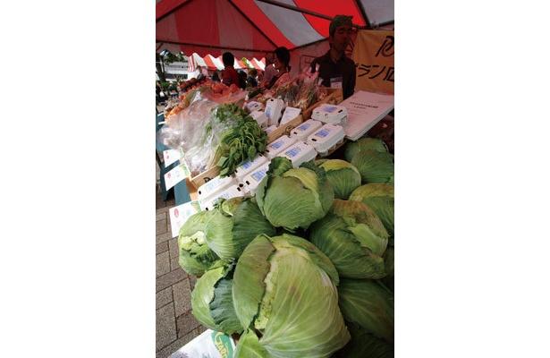 地産地消の野菜がウマイ!