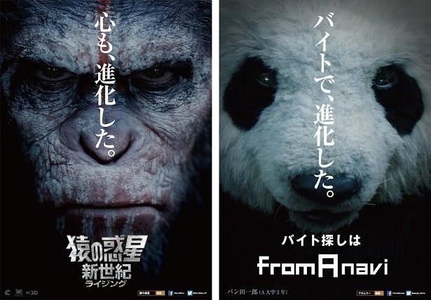 【写真を見る】猿とパンダ、種族を超えた奇跡のコラボ!