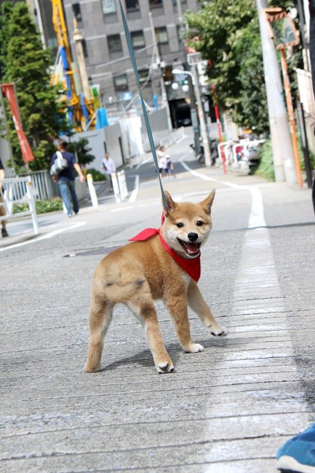 【写真を見る】散歩中にはしゃぐ一郎の写真はこちらから