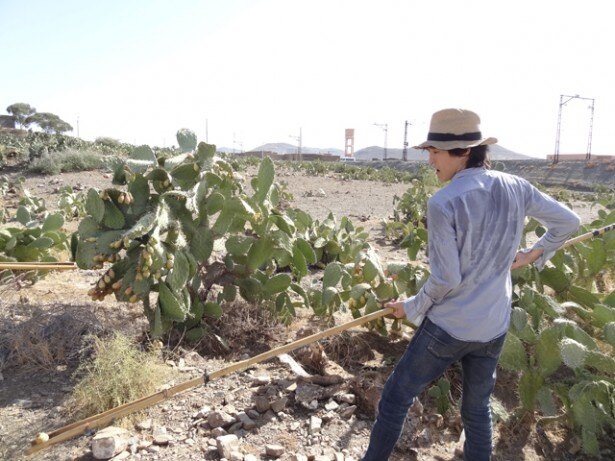 ホームステイ先でサボテンの収穫を手伝う千原ジュニア
