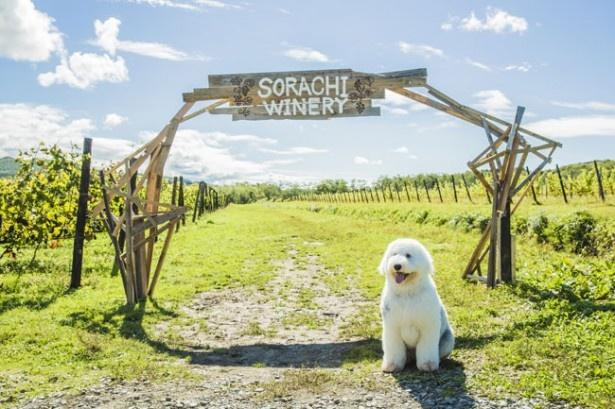 兄弟の愛犬バベットを演じた大型犬のかわいさに出演者もメロメロ