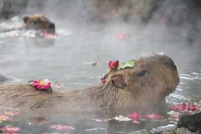 ツバキに囲まれて入浴する姿が愛らしい