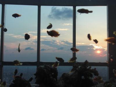 空を泳ぐ魚