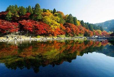 5色に変化しながら染まっていく「五色モミジ」が見事な、2位の香嵐渓(愛知県豊田市)