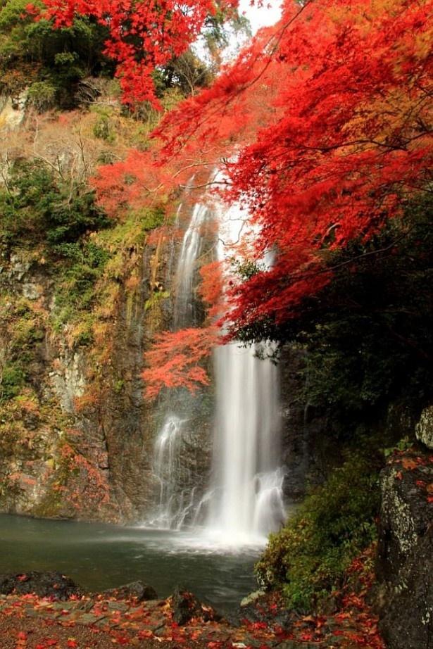 「日本の滝百選」に選定されている落差33mの箕面大滝(大阪府箕面市)