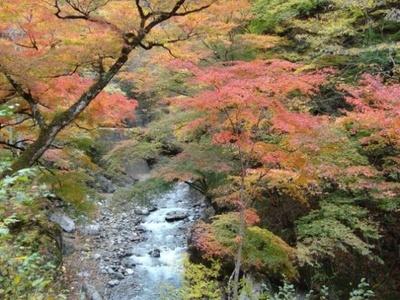 9位の中津峡(埼玉県秩父市)。11月24日(祝)まで奥秩父大滝紅葉まつりが開催