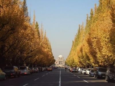 11位の明治神宮外苑(東京都新宿区)。約300m続くイチョウ並木が有名