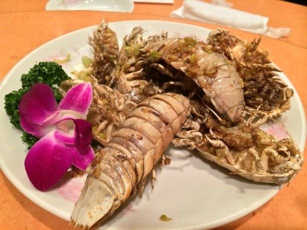 見た目にインパクトがあるオオグソクムシの試食は、50食限定なのでお早めに