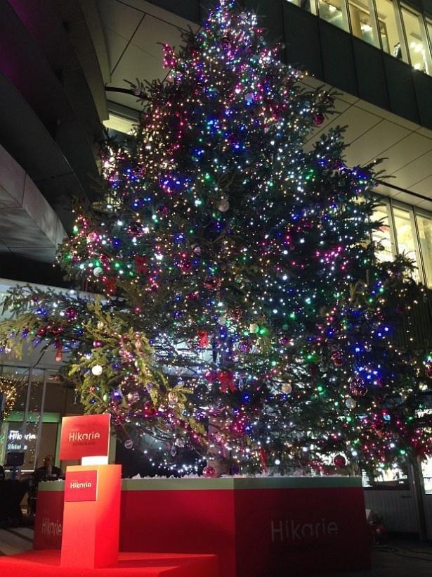 ヒカリエ開業以来初めて生木を使用した。全長8mのクリスマスツリー、ヒカリノキ