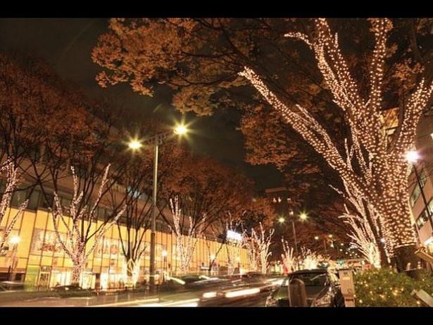 11位の表参道ケヤキ並木(東京都渋谷区)。今年は「ペリエ presents 表参道イルミネーション2014」を展開