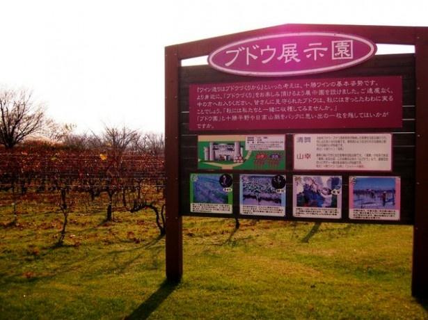 ワイン城の敷地内にはブドウ展示園もある