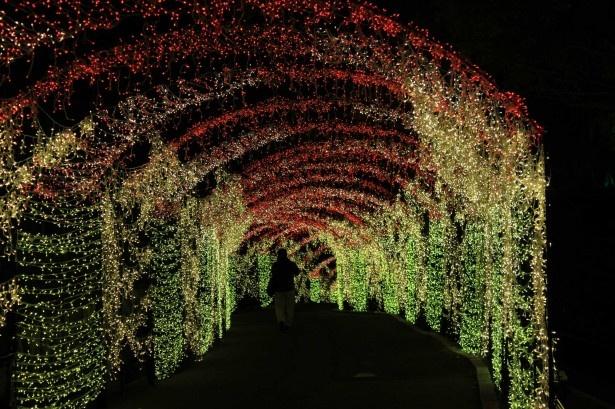 光り輝くイルミネーションのトンネル「炎の洞窟」