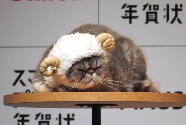 CMに出演しているブサかわなネコも登場